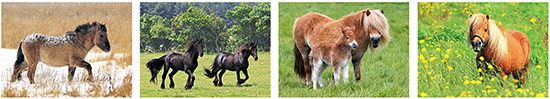 horse cards - horse postcards