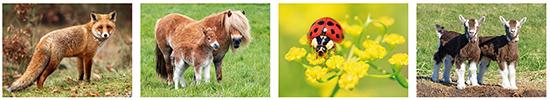 animal postcards