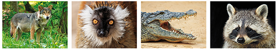 zoo postcards