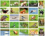 Postcard set Animals
