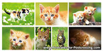 Cat postcard set