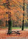 Postcard autumn bench