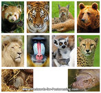Postcard set zoo animals