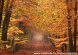 Postcard autumn lane on the Veluwe