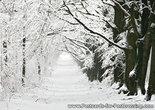 Postcard winters lane