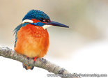 Postcard from a Kingfisher