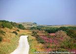 Postcard the dunes of Ameland