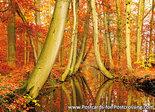 Postcard Twickelervaart