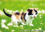 Postcard cat in flower field