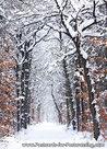 Forest Mensinge postcard