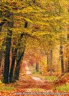 Postcard autumn lane