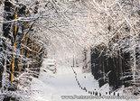 Postcard winter lane