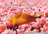Postcard clogs in pink tulip field