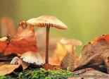 Postcard mushrooms in autumn