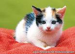 Postcard kitten on pillow