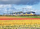 Postcard Sprinter train with tulip field