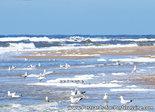 Postcard beach and sea