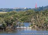 Postcard lighthouse Schiermonnikoog