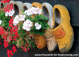 Postcard clogs with geraniums