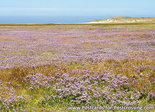 Postcard Texel - the Slufter in bloom