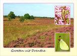 Postcard heath in Drenthe