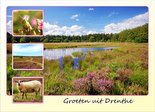 Postcard heather in Drenthe