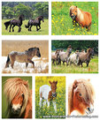 Postcard set horses and ponies: