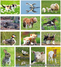 Postcard set animals