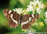 Postcard Map butterfly