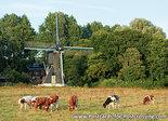 Postcard Schoterveense mill Haarlem