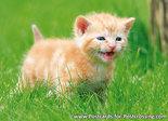 Kitten card - kitten postcard