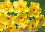 Narcissuscard