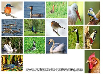 Birds postcardset