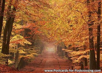 Postcardautumn lane on the Veluwe