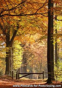 Autumn postcard - lane