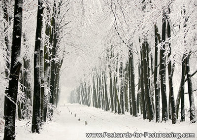 Postcard winters lane on the Veluwe
