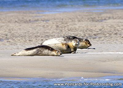 Earless seals postcard