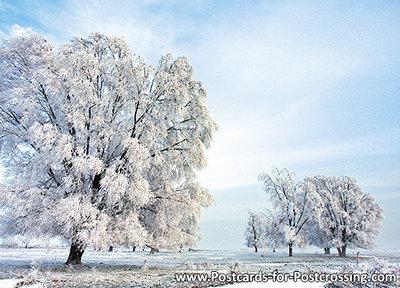 Postcard winter in Lauwersmeer