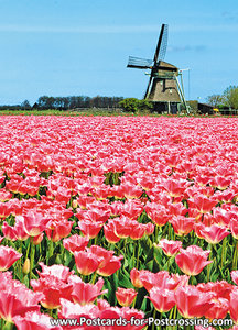 Postcard polder mill P