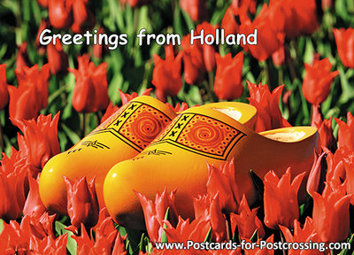 Postcard clogs in a red tulip field