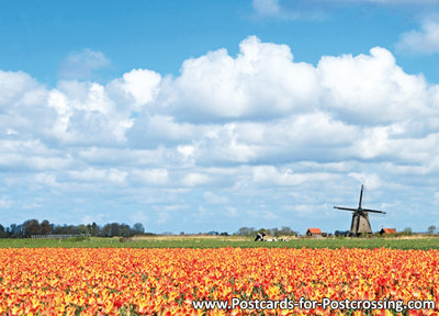Postcard Mill with tulip field