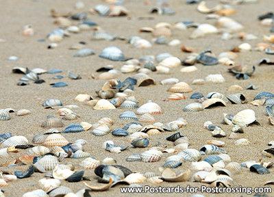 Postcard seashells on beach