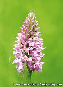 Wild orchid postcard