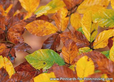 Postcard fall leaves