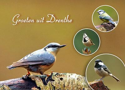 Postcard birds in Drenthe