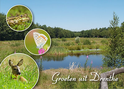 Postcard greetings from Drenthe 004