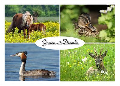 Postcard Animals in Drenthe