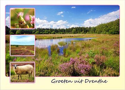Postcard heather in Drenthe