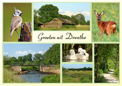 Postcard landscape and animals Drenthe