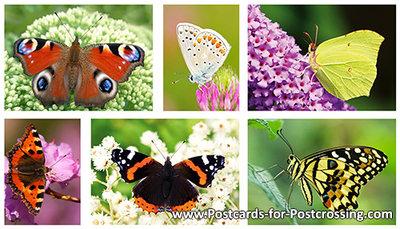 Butterfly postcard set